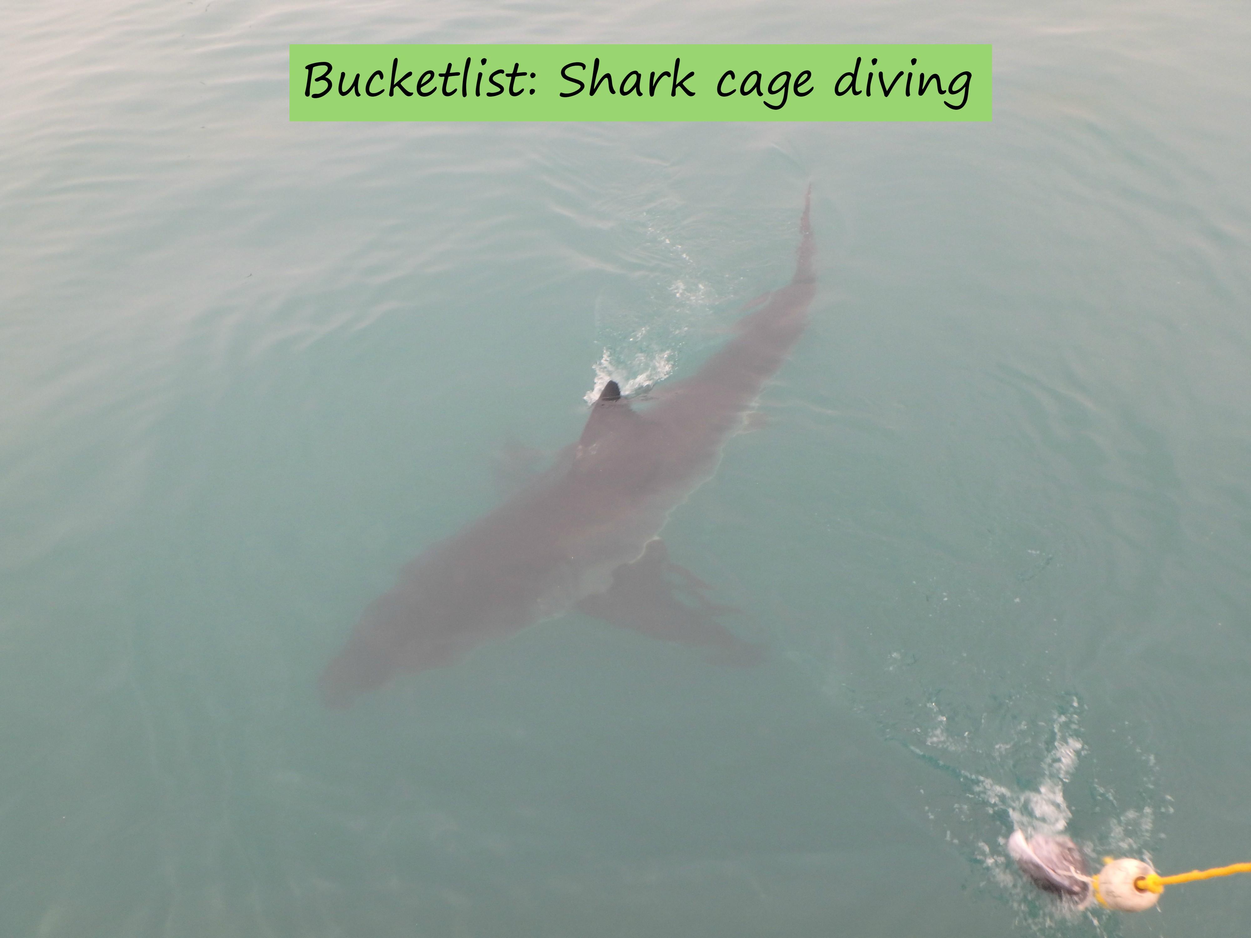 sharkcagediving